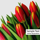 Red tulips vector — Stock Vector