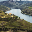 Stock Photo: Douro river valley
