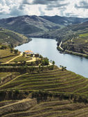 Douro river valley — Stock Photo