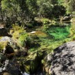 Clear river in green florest - Stock Photo