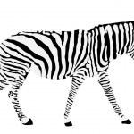 Zebra silhouette — Stock Vector