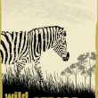 Wild africa image with zebra — Stock Vector