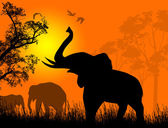 Wild elephants at sunset — Stock Vector