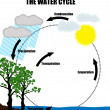 Stock Vector: Schematic representation of water cycle in nature