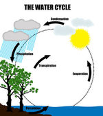 Schematic representation of the water cycle in nature — Stock Vector
