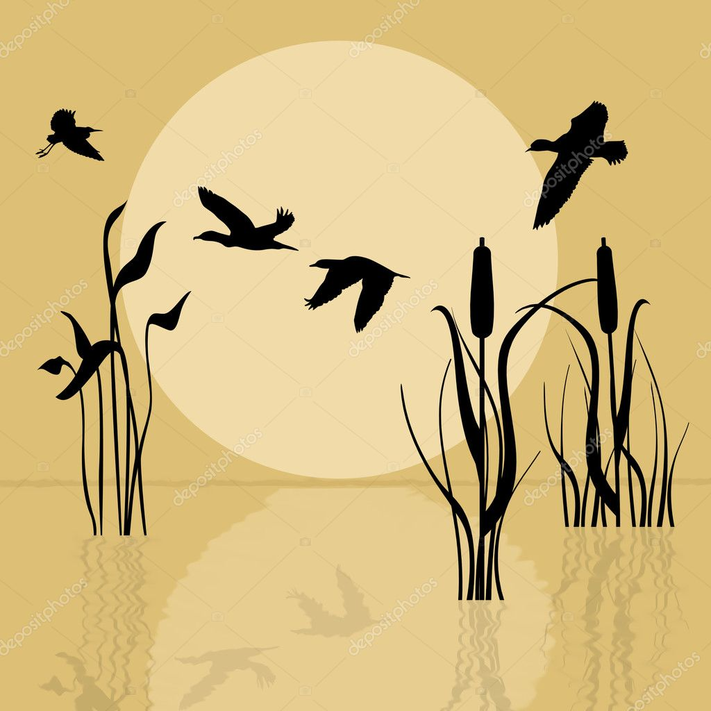 矢量背景与湖鸟飞越在日落时的剪影— 矢量图片作者 roxanabalint