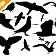 Set of silhouettes of birds — Stock Vector