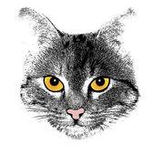 Visage de chat stylisé sur blanc — Vecteur