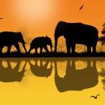 sagoma di elefanti in africa — Vettoriale Stock  #51395479