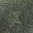 Starfish - Stock Photo