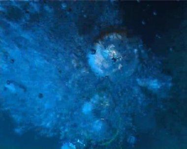 Bubliny — Stock video