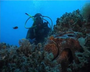 Diver and Octopus — Stock Video