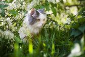 Gatto in erba — Foto Stock