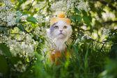 Gato na grama — Foto Stock
