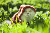 Chat en herbe — Photo