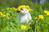 весна кошки — Стоковое фото