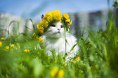 Cat spring — Stock Photo