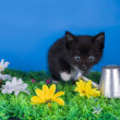 Little kitten playing in the grass — Stock Photo