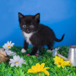 Little kitten playing in the grass — Stock Photo #48544251