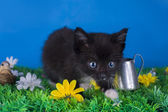 Little kitten playing in the grass — Foto Stock