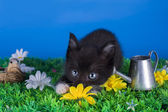 Little kitten playing in the grass — Stockfoto