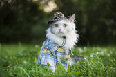Cat in spring grass — Stock Photo