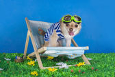 Chihuahua in striped vest on holiday  — Stock Photo