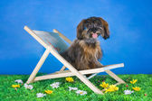 Dog Breed the Petersburg orchid resting on a sun lounger  — Stock Photo