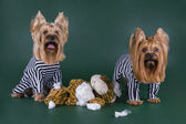 Dogs in prison for murder toys — Stock Photo