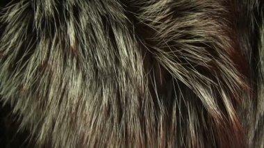 毛皮大衣。特写 — 图库视频影像