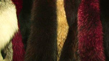 Fur store — Stock Video