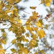 Autumn tree — Видео