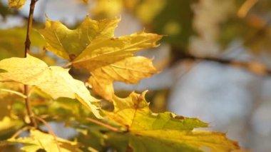 Mellow autumn — Stock Video