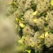 Shrubs close-up — Stock Video