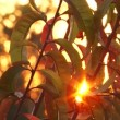 Sunlight breaks through green leaves — Stock Video #14174908