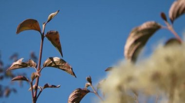 Plant leaves trembling in the wind — Stock Video