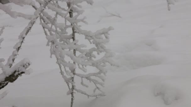 Clima de invierno. — Vídeo de stock