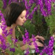 Stock Video: Girl was lying with laptop. Girl lying on field of beautiful flowers and trained on laptop.