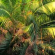 Beautiful palm branches. Beautiful and green palm branches — Stock Video