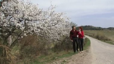 Love couple walking around almonds. Love Couple walking along the road next to the flowering almond tree. — Stock Video #18592285