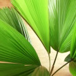 Closeup of an exotic green indoor tree — Stock Video