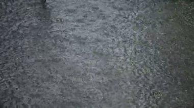Rain HD — Stock Video