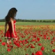 Beautiful Woman In A Poppy Field — Stock Video