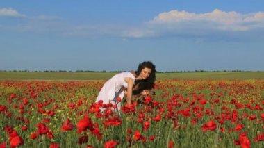 Poppy Bouquet — Stock Video
