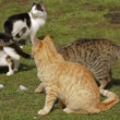 Stock Video: Troop of cats sitting in sun on green grass. Cat troop.