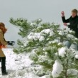 Couple playing snowballs in pine forest — Видео