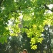 Newlyweds posing in a park. — Stock Video