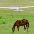 Stock Video: Horse in lawn