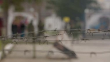 Barbed wire. — Stock Video