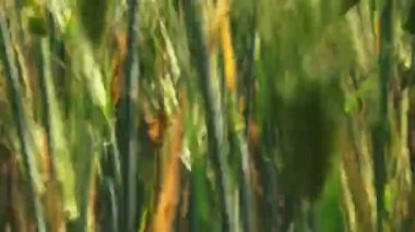 Green Field — Stock Video